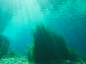 Sinking Sunbeams