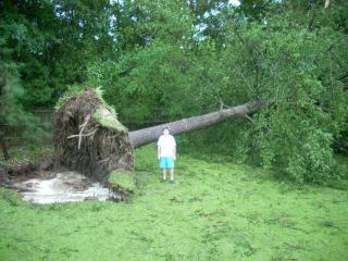 Irene photos tree down