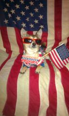 Labor Day Dog Supports the Troops!