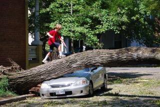 Irene Aftermath Photo: Richmond, VA