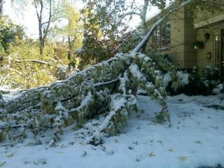Snow Damage - Livingston, NJ