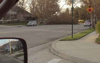 Wind Damage in Rancho Cucamonga, CA