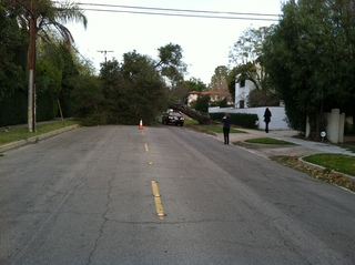 Photos of Wind Damage in Alhambra & San Marino
