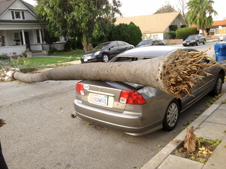 Tree hit my Car!!!