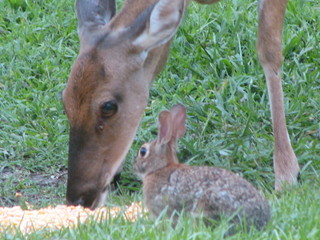 The Real Bambi and Thumper