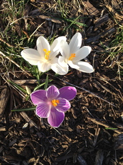 Spring Flowers Have Bloomed!