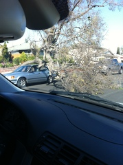 Tree Falls On Car in Gardena