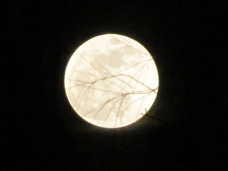 Supermoon in Safety Harbor