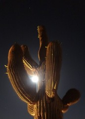 Supermoon photo through a Saguaro Cactus