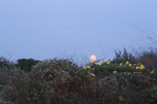 Supermoon over Sullivan's Island SC