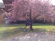 Spring Biking/Hiking along the park filled with Cherry Blossom