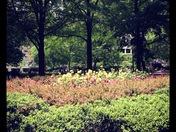 Lunch Walk in Rittenhouse Park Philly