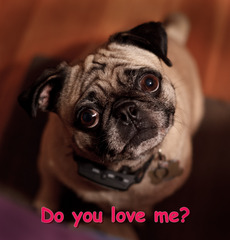 Gracie asks....do you love me?
