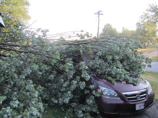 Storm Damage in Maryland