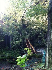 Trees down on dads roof