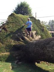 Huge Uprooted Tree