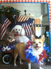 Patriotic Pooches