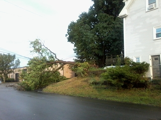 Tree down because of weather