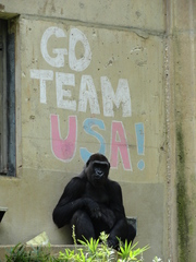 GO TEAM USA!!!