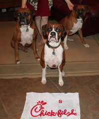 Chick fil-a appreciated by my Boxers also!