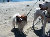 Mo & Lady Running on the Beach