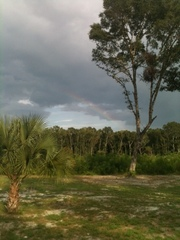 Rainbow in Cross City, FL