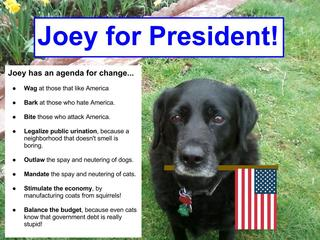 My dog joey is runnning for president