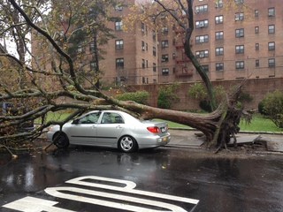 Trees falling in Queens, NY
