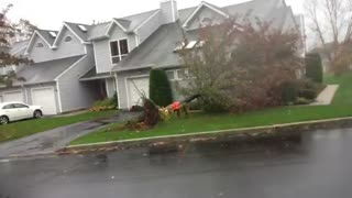 Sandy tree uprooting caught on video.