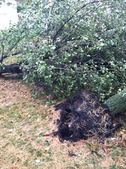 Two trees down in Lumberton, NJ