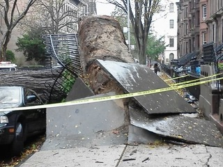 Sandy in bed-stuy!