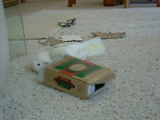 Freebie plays with a box