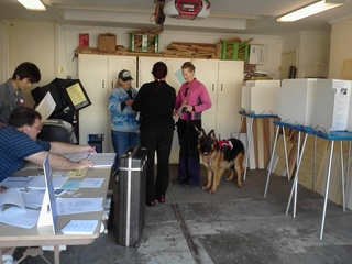 Voting with the dog in California