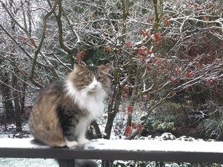 My cat Button enjoying the snow