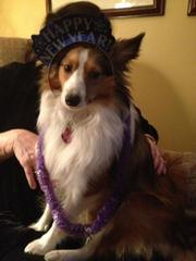 My puppy dressed up for the New Year!!