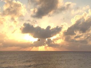 Dove of Peace; Little Cayman