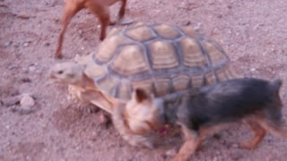 Pup takes on turtle