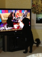 Dog watching news