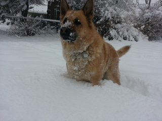 Snow covered pup