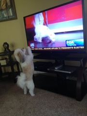 Rocco watching Fox News
