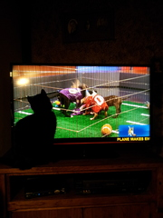 Puppy Bowl & cat