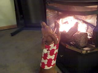 A Cold Hot Dog