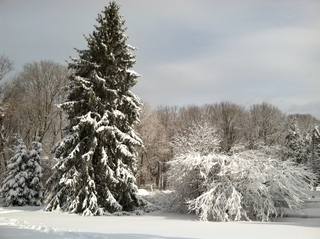Snow view in Suffolk county