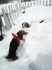 Holly and Comet in 33in of Snow